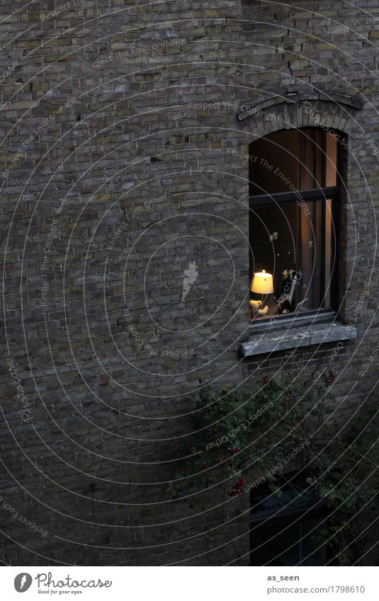 Fenster zum Hof Häusliches Leben Wohnung Haus Umzug (Wohnungswechsel) einrichten Lampe Stadt Mauer Wand Teddybär Lampenschirm leuchten authentisch dunkel hell