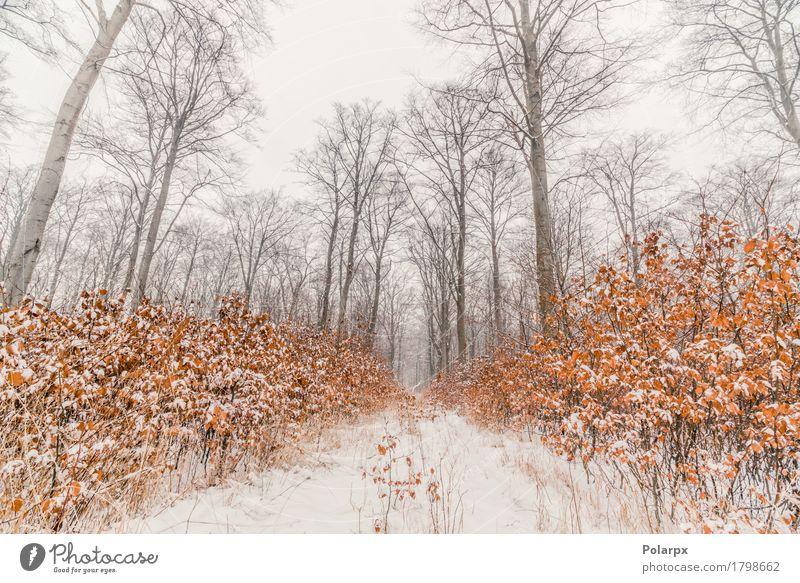 Buchenbäume bedeckt mit Schnee in einem Wald schön Winter Umwelt Natur Landschaft Himmel Wetter Nebel Baum Gras Coolness grau weiß Skandinavien Dänemark