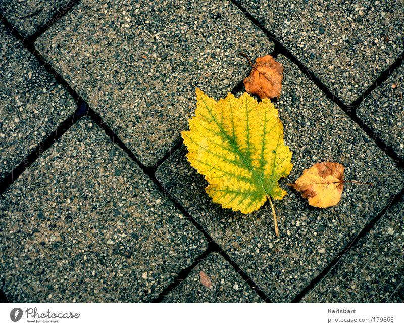 autumn. leaves. Lifestyle Design Leben Erholung Erntedankfest Umwelt Natur Herbst Klima Klimawandel Baum Blatt Park Wiese Straße Wege & Pfade Bewegung liegen