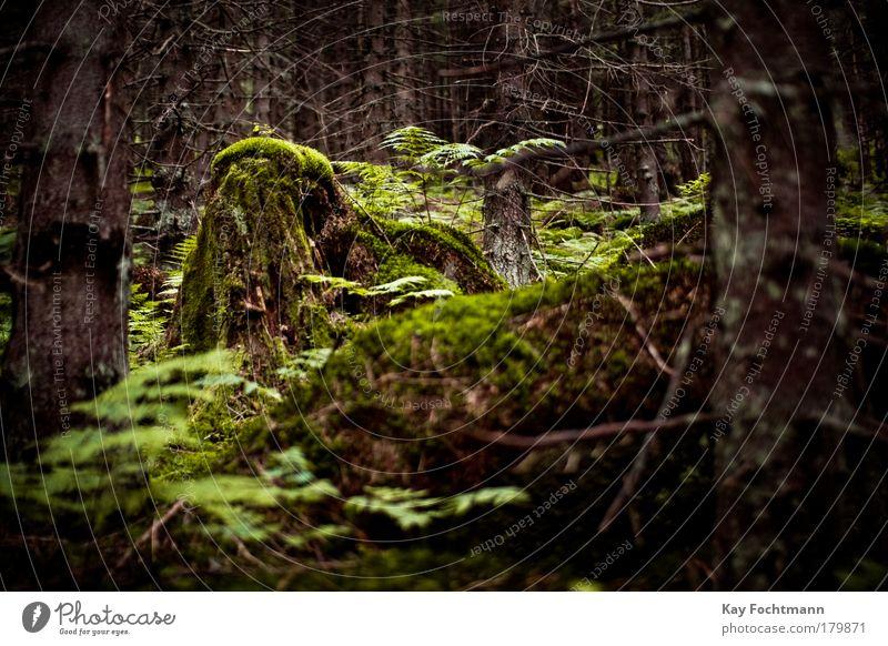 into the wild Natur grün schön Baum Pflanze Sommer Wald dunkel kalt