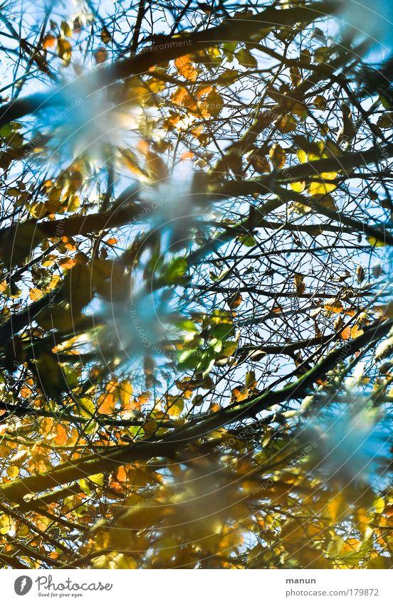 Wasserfarben Natur Wasser Baum Blatt ruhig gelb Erholung Herbst See gold Design Wandel & Veränderung Vergänglichkeit türkis Lebensfreude Reflexion & Spiegelung