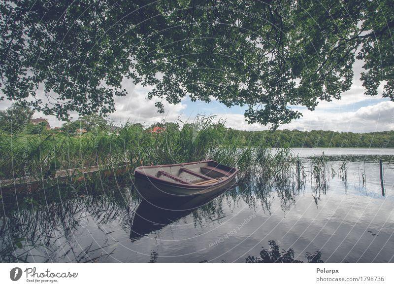 Kleines Boot unter grünem Reed schön Erholung ruhig Freizeit & Hobby Ferien & Urlaub & Reisen Natur Landschaft Küste Teich See Fluss Verkehr Segelboot