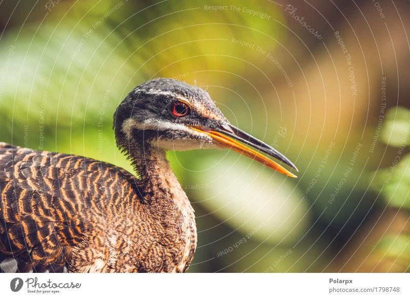 Nahaufnahme eines sunbitter Vogel in einem bunten Regenwald schön Gesicht Natur Tier Blatt Wald Urwald füttern stehen natürlich wild Sonnendusche Tierwelt