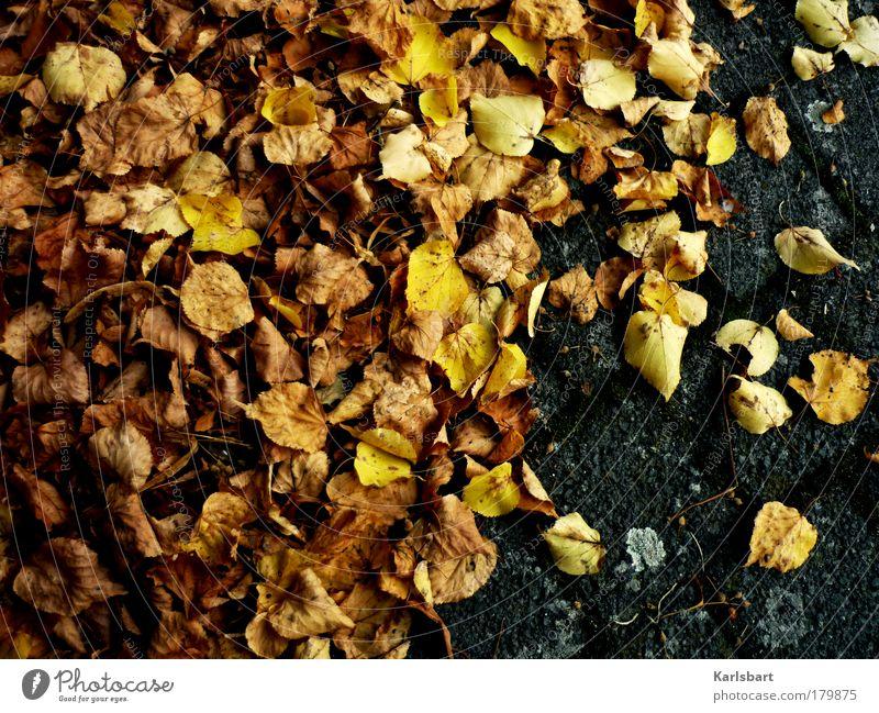 laub. gebräunt. Lifestyle Design Erntedankfest Umwelt Natur Herbst Klima Klimawandel Blatt Park Straße Wege & Pfade alt Bewegung fliegen braun gelb grau