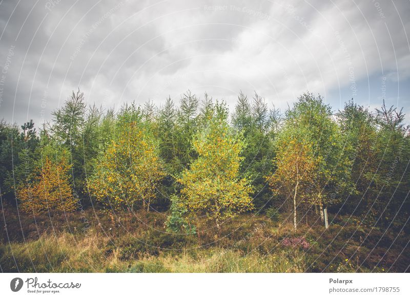 Himmel Natur Pflanze Farbe grün schön Baum Landschaft rot Blatt Wald Umwelt gelb Wege & Pfade Herbst natürlich
