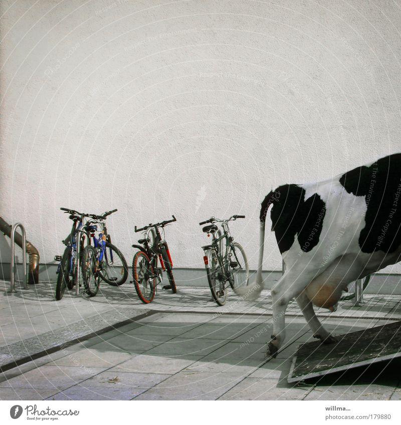 sie kam mit dem sattel nich klar Stadt Tier Wand Mauer Fahrrad Ausflug fahren Kuh Mobilität parken Schwanz Nutztier Rind bequem Verkehrsmittel scheckig