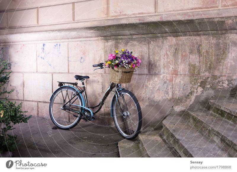 Fahrrad mit einem Korb voller Blumen an der alten Mauer Stil Design schön Ferien & Urlaub & Reisen Dekoration & Verzierung Natur Kleinstadt Stadt Architektur