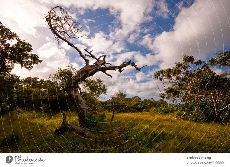 reaching the sky Natur alt Himmel Baum blau Sommer Wolken Einsamkeit Tier gelb Wiese Gras Wärme Landschaft ästhetisch Ast