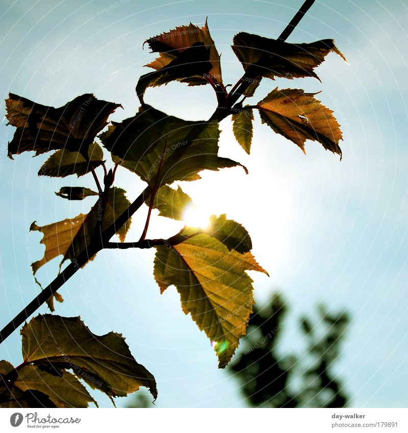 Herbstfarben Natur Himmel weiß Sonne grün blau Pflanze Blatt Wolken gelb Herbst Park Luft braun Sträucher Schönes Wetter