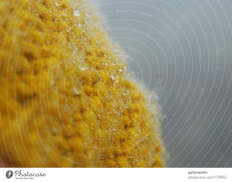 Gelbe Perlen Wasser blau Winter gelb Erholung Herbst Berge u. Gebirge grau Kopf Nebel Wassertropfen nass Frost Spaziergang Tropfen