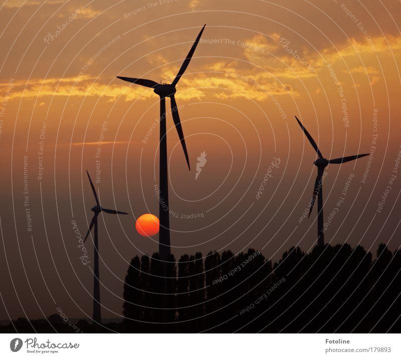 Es ist 5 nach 12 Natur Baum rot schwarz Landschaft Wind Wetter Umwelt gold Erde Industrie Energiewirtschaft Technik & Technologie Klima Wissenschaften
