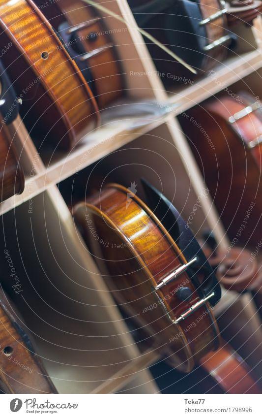 Geigen II Stil Musik Kunst ästhetisch Geigenbau Farbfoto Innenaufnahme Studioaufnahme Nahaufnahme Detailaufnahme Menschenleer