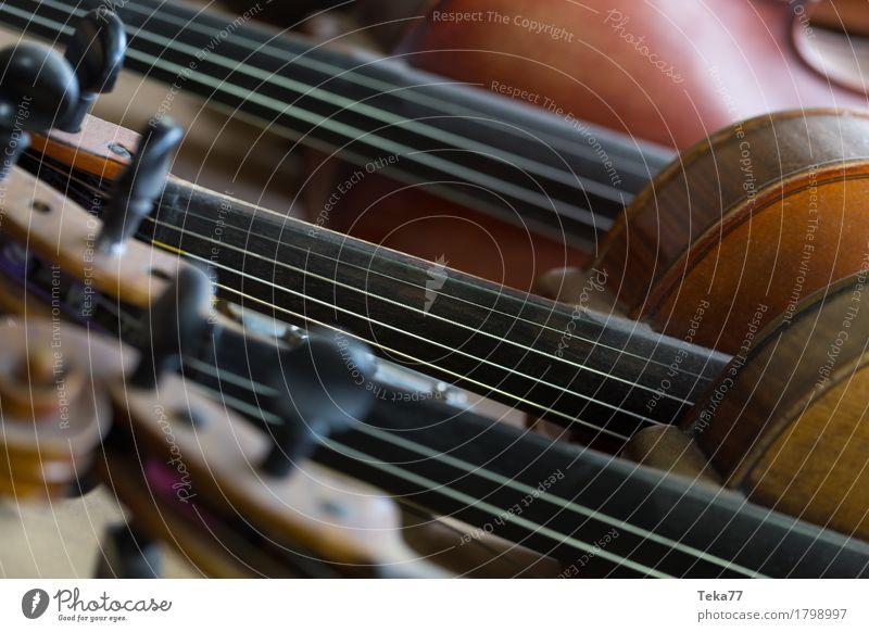 Geigen I Stil Musik Sammlung Holz ästhetisch Geigenbau Farbfoto Innenaufnahme Studioaufnahme Nahaufnahme Detailaufnahme Makroaufnahme Menschenleer