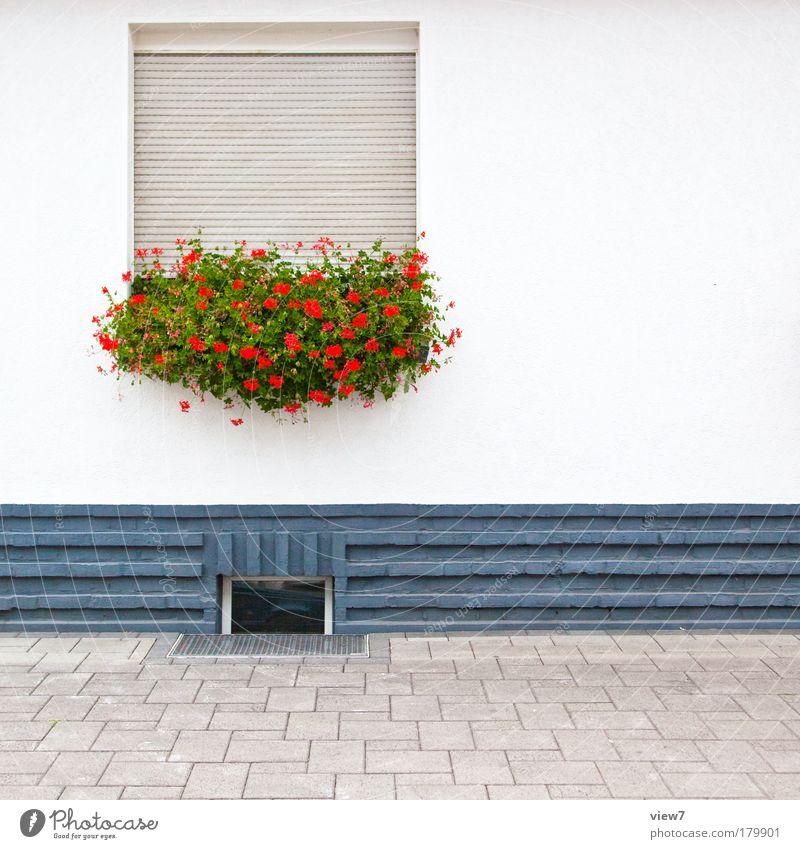 freundlich introvertiert Farbfoto mehrfarbig Außenaufnahme Detailaufnahme Textfreiraum rechts Starke Tiefenschärfe Zentralperspektive Blume Dorf Haus
