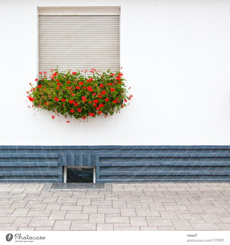 freundlich introvertiert schön Blume rot Haus Ferne Wand Fenster Stein Mauer Linie Fassade authentisch Kitsch Schutz einzigartig Streifen