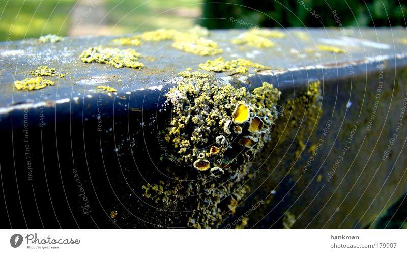 Gammelgeländer Natur alt blau schwarz gelb Metall natürlich Dorf Rost Pilz Ekel Ausdauer standhaft Gartenzaun