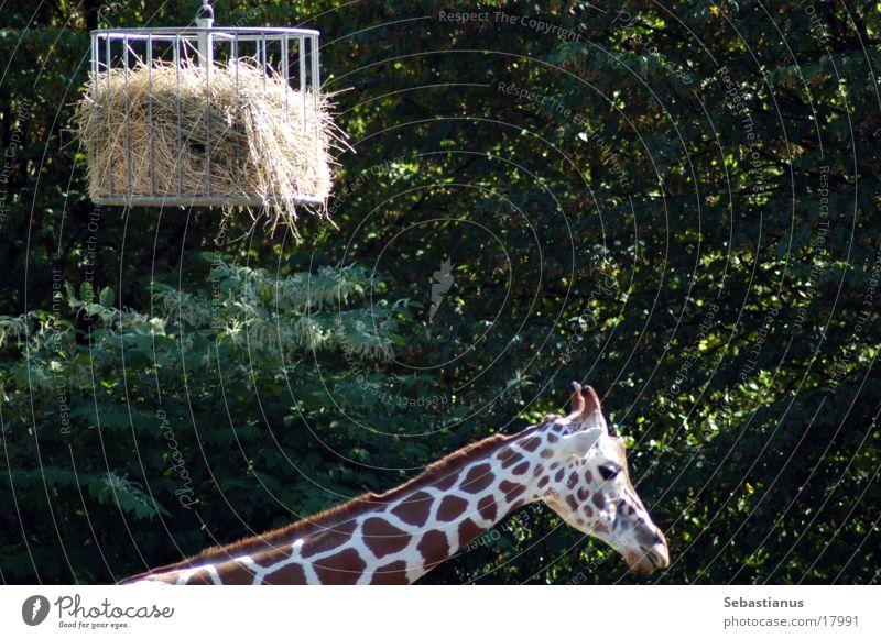 ich krieg nen Hals Stroh Giraffe Käfig