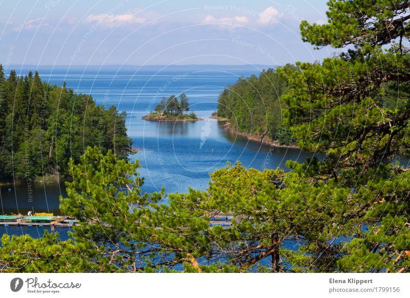 Ladoga-See. Natur Landschaft Pflanze Wasser Himmel Wolken Horizont Sommer Wetter Schönes Wetter Baum Kiefer Wald Gelassenheit ruhig Erholung