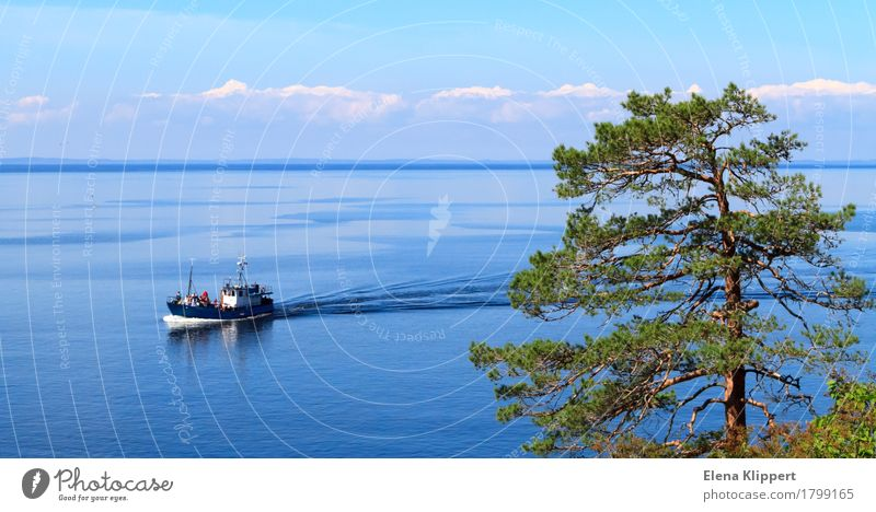 Ladoga-See. Himmel Natur Ferien & Urlaub & Reisen Pflanze Sommer Wasser Baum Landschaft Erholung Wolken ruhig Freude Freiheit Tourismus Horizont