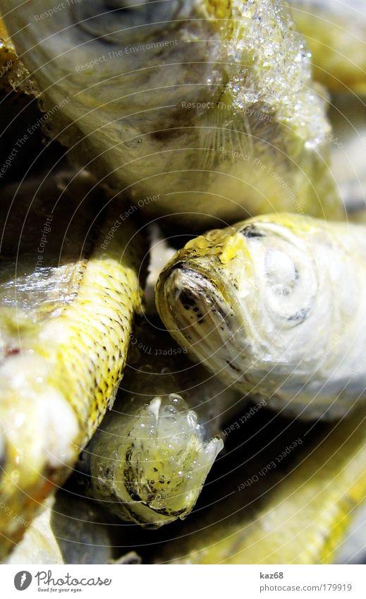 drunter und drüber Meer Tier Auge Tod Ernährung Lebensmittel Eis frisch Fisch Fisch Tiergruppe Appetit & Hunger genießen lecker Angeln Bioprodukte