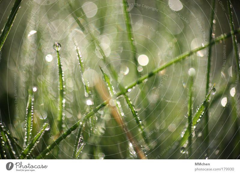 i I i Xi I Natur Pflanze Sommer Wasser Erholung Wiese Gras Regen glänzend Wassertropfen Klima Rasen Tropfen Kugel Halm Tau