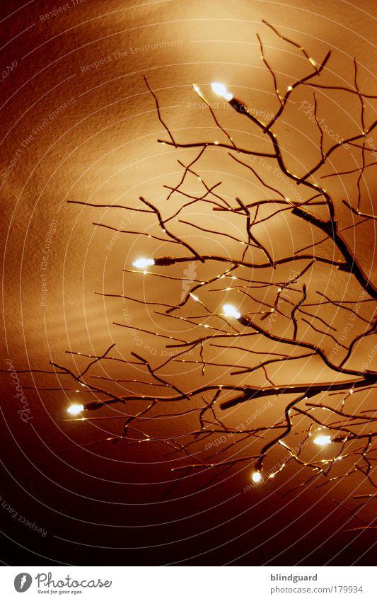 Tears Of The Trees Weihnachten & Advent Baum rot gelb Lampe abstrakt Stein Stimmung Feste & Feiern Metall Glas Design gold Energie Energiewirtschaft
