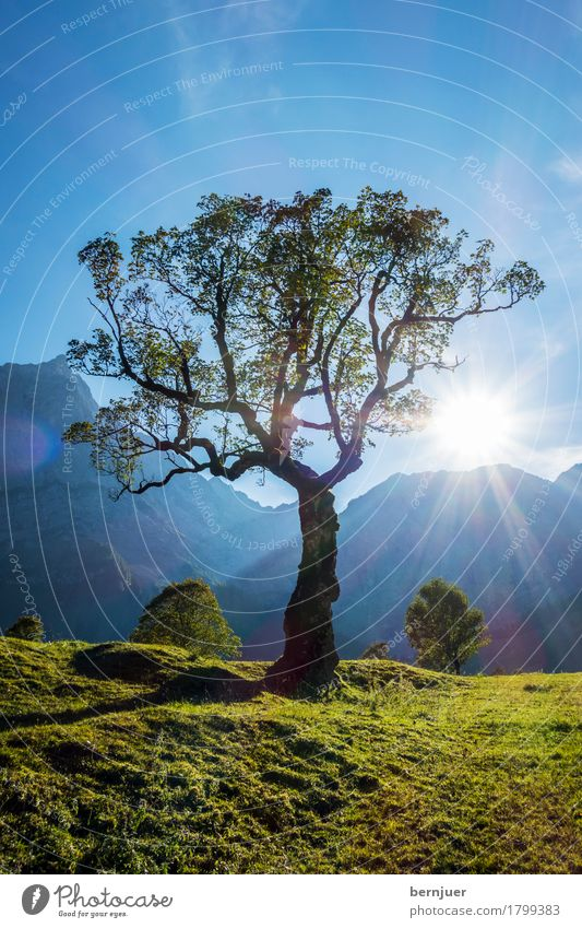 Ahorn Natur Pflanze blau Sommer grün Landschaft Sonne Baum ruhig Berge u. Gebirge Umwelt Herbst Erde Luft Gipfel Alpen