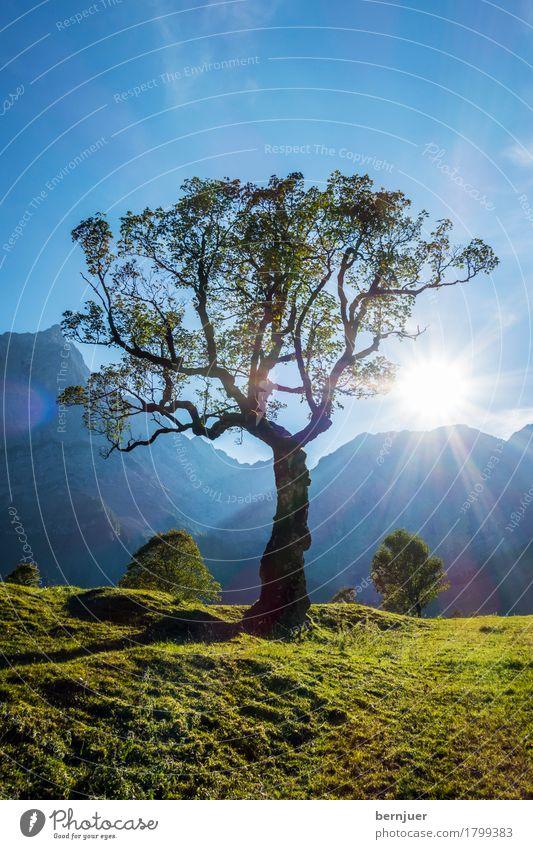 Ahorn Umwelt Natur Landschaft Pflanze Erde Luft Sonne Sonnenaufgang Sonnenuntergang Sommer Baum Grünpflanze Alpen Berge u. Gebirge Gipfel blau grün ruhig