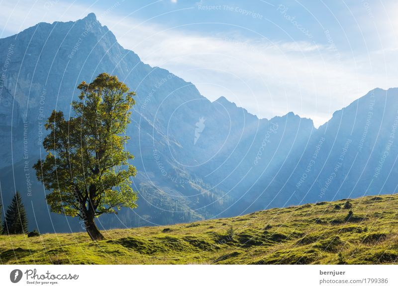 Solitude standing Pflanze blau grün Baum Einsamkeit Wolken Blatt ruhig Berge u. Gebirge Herbst Wetter einzigartig einzeln Schönes Wetter Gipfel Alpen