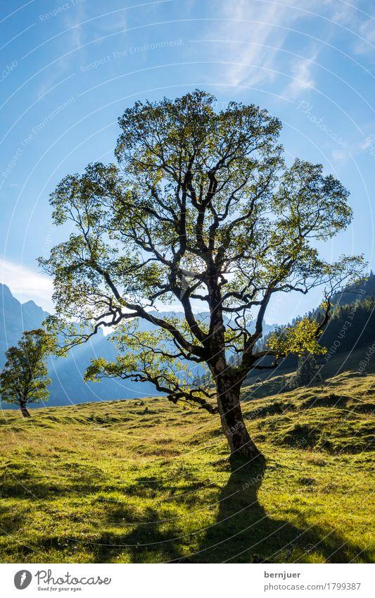 Ahorn Natur Pflanze blau grün Landschaft Baum Blatt Wolken Berge u. Gebirge Leben Umwelt Gras Wetter Erde ästhetisch Schönes Wetter