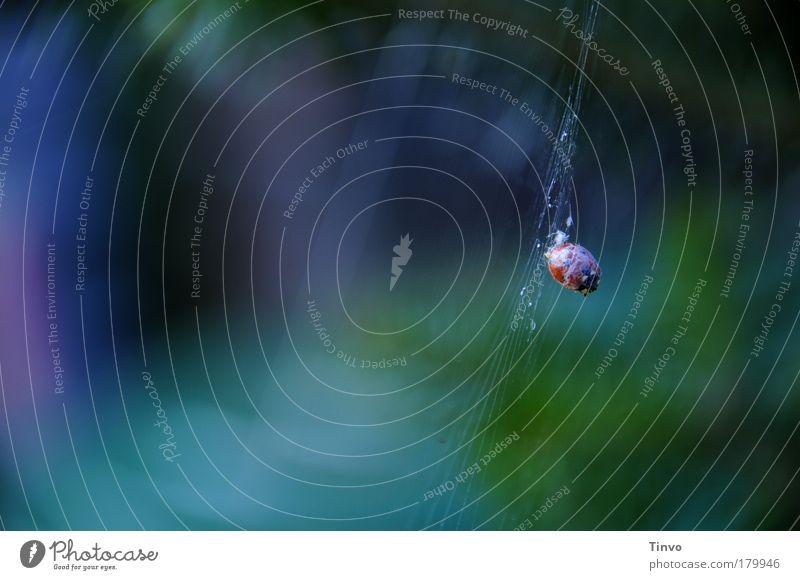 fin Natur grün blau Einsamkeit Tier Gefühle Tod Traurigkeit gefährlich violett Vergänglichkeit gruselig hängen gefangen Marienkäfer Käfer