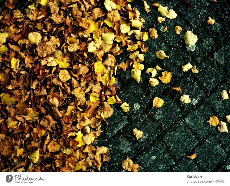 mit verlaub. Design Erntedankfest Arbeit & Erwerbstätigkeit Gartenarbeit Umwelt Natur Herbst Wetter Baum Blatt Park Platz Verkehr Straße Wege & Pfade Stein