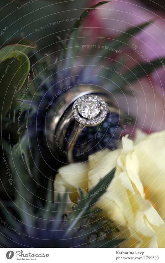 Ehering Verlobungsring Beisteckring Brautstrauß Blumen Pflanze blau schön gelb Liebe Stil Zusammensein rosa glänzend Dekoration & Verzierung elegant