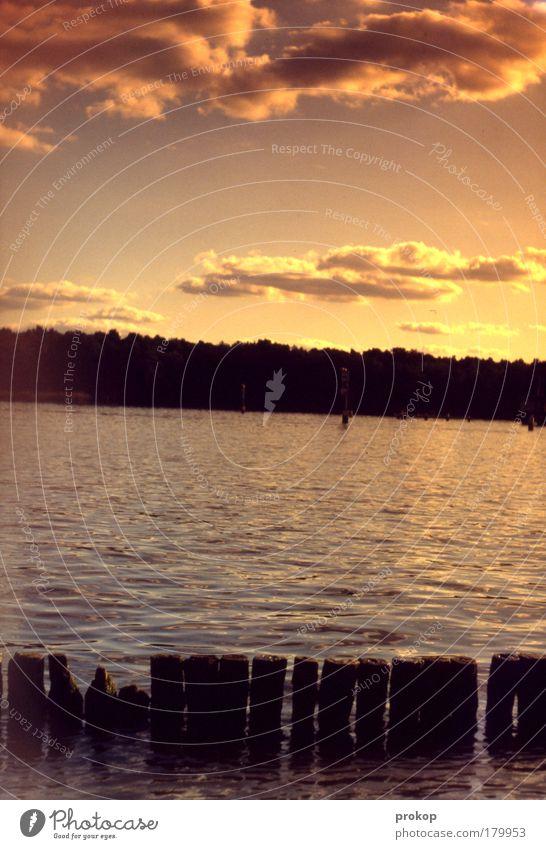 Gegenbrille durch Sonnenlicht Farbfoto Außenaufnahme Tag Gegenlicht Totale Umwelt Natur Landschaft Pflanze Wasser Himmel Wolken Sommer Herbst Schönes Wetter