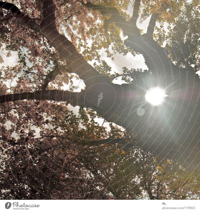 Falling Leaves Natur alt Himmel Baum Sonne grün rot Sommer Blatt Wolken gelb Herbst Park braun Umwelt Zeit