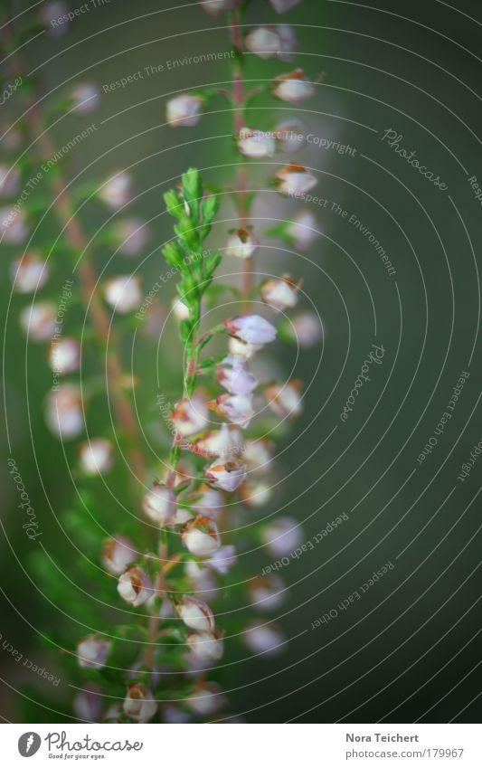 Blütentraum Farbfoto Gedeckte Farben Außenaufnahme Nahaufnahme Detailaufnahme Makroaufnahme abstrakt Menschenleer Tag Schatten Unschärfe Schwache Tiefenschärfe
