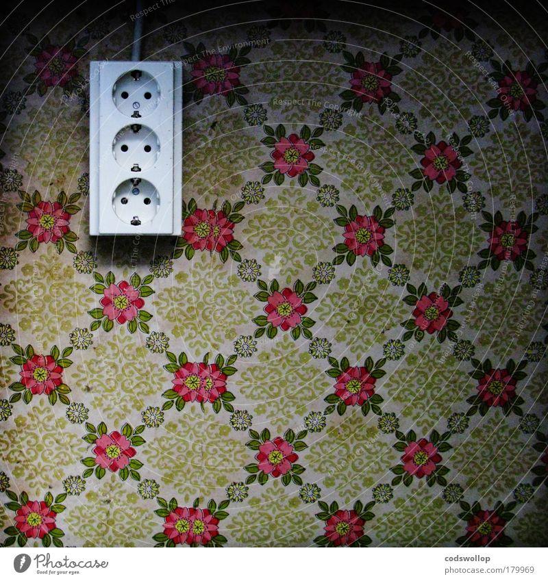 dreigängig alt Blume Wand Traurigkeit Mauer außergewöhnlich Idylle trist Elektrizität retro einzigartig 3 Küche Vergangenheit Verfall Denkmal