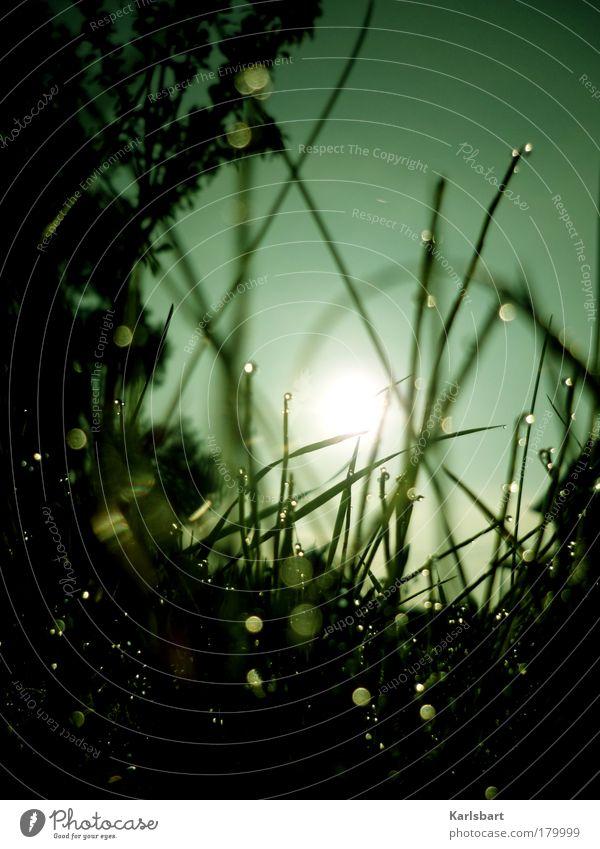 °oOo°xXx°oOo°xXx°oOo° Lifestyle Design Leben Freiheit Umwelt Natur Wassertropfen Himmel Sonne Sonnenlicht Frühling Herbst Schönes Wetter Gras Wiese Linie