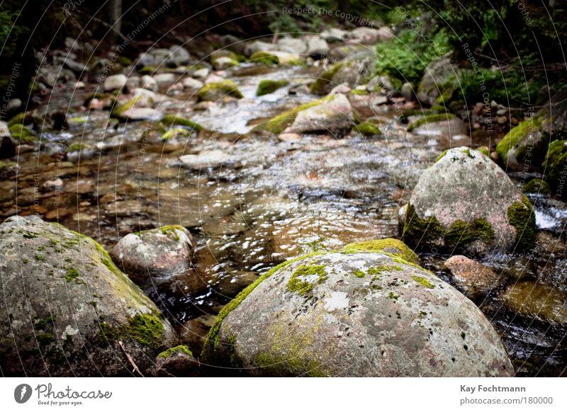 unten am fluss Ausflug Umwelt Natur Landschaft Pflanze Wasser Sommer Moos Wald Bach Fluss nass Farbfoto Außenaufnahme Tag Schwache Tiefenschärfe