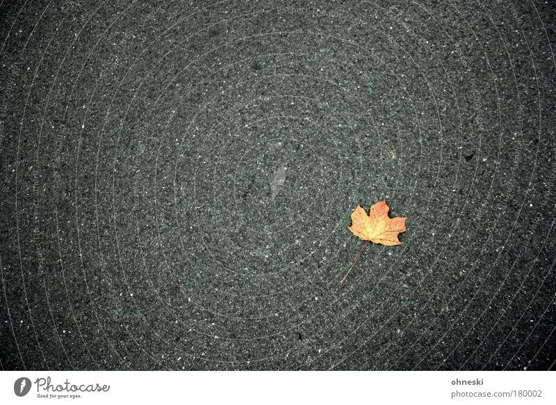 Blattschuss Natur Baum Pflanze Einsamkeit Straße Herbst grau trist einfach Vergänglichkeit Ahorn