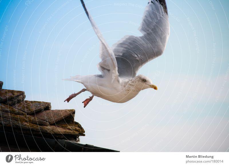 seagul airstrip Himmel Natur weiß blau Tier Bewegung grau Luft Umwelt Vogel braun Zufriedenheit fliegen frisch wild Flügel