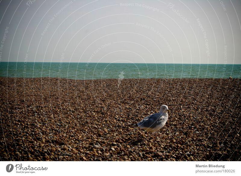 sea-gul-stone-water-arrangement Natur Wasser weiß blau Sommer Strand ruhig Tier grau Stein See Sand braun Umwelt Sauberkeit Gelassenheit