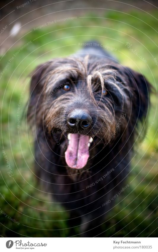 strolch Hund Natur Tier schwarz Bewegung warten Fell Tiergesicht Haustier Zunge Kopf Hundeschnauze Hundeblick Hundeauge