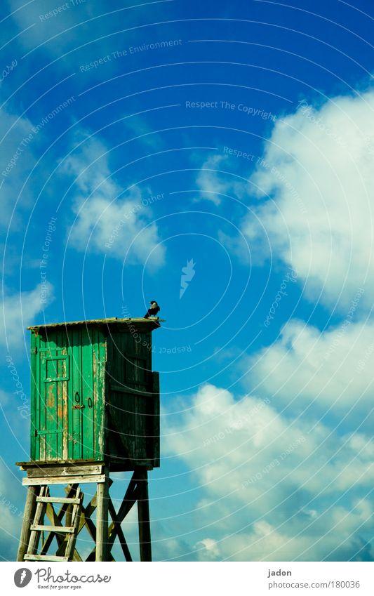 aufpasser Farbfoto Außenaufnahme Textfreiraum rechts Textfreiraum oben Jagd Expedition wandern Häusliches Leben Wohnung Haus Traumhaus Vogel beobachten Blick