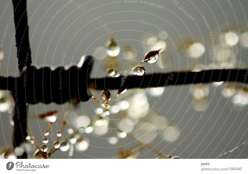 sehnsucht Farbfoto Außenaufnahme Nahaufnahme Detailaufnahme Makroaufnahme Menschenleer Morgen Licht Schatten Reflexion & Spiegelung Sonnenlicht