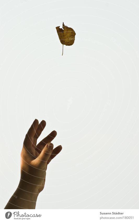 dem Herbst zum Greifen nah Hand Sonne Pflanze Blatt Park Luft Arme Finger berühren greifen Zauberei u. Magie Trick Erreichen welk hypnotisch nur Himmel