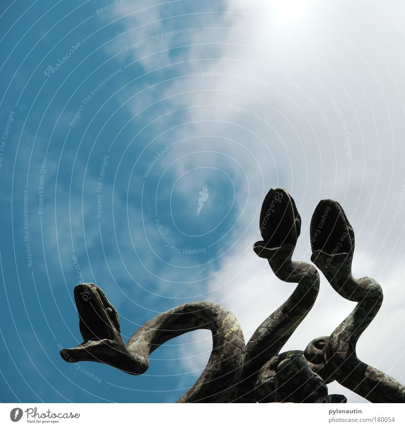 Schlangengesang Himmel weiß blau Wolken Tier Zoo Statue Skulptur singen Lied Reptil Gesang Chor Kunst schlangenförmig