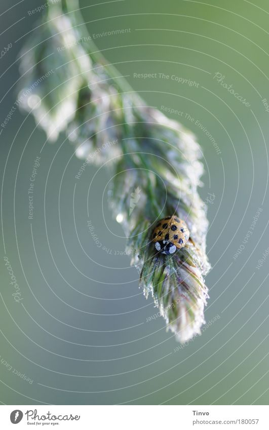 Guten Morgen! Natur Pflanze ruhig Einsamkeit Tier kalt Herbst Gras klein nass Insekt Punkt Getreide niedlich Tau Fleck
