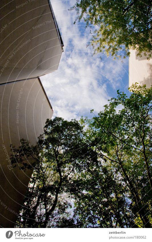 Sommerhimmel im Stadtbezirk X Himmel Baum Sonne grün Pflanze Blatt Haus Wolken Mauer Gebäude Hinterhof hinten Mieter Stadthaus Sauerstoff