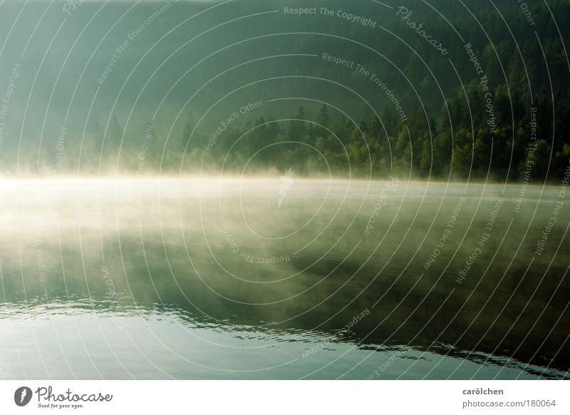 Ruhe Natur Wasser Baum grün Sommer Ferien & Urlaub & Reisen ruhig Wald dunkel Erholung Freiheit träumen Traurigkeit See Landschaft